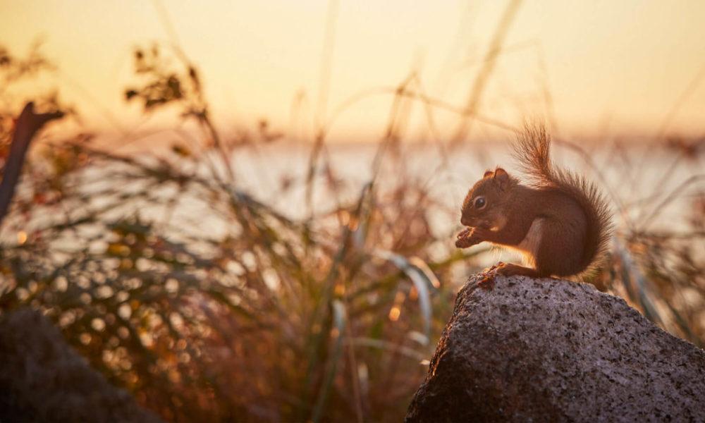 BackgroundImages_Squirrel